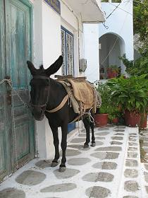 Donkey, Greek Island